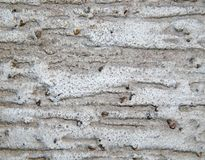 Texture of a surface of granular architectural putty Royalty Free Stock Photography
