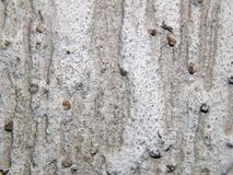 Texture of a surface of granular architectural putty. Close-up Stock Photo