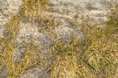 Texture of the surface of a gray stone partially covered with green moss Stock Images