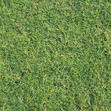 Texture and surface of green turf royalty free stock images