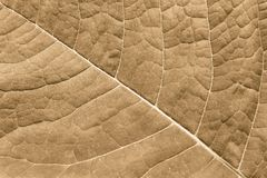 Texture surface leaf plant of brown color Royalty Free Stock Images