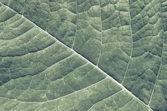 Texture surface leaf plant Stock Photography