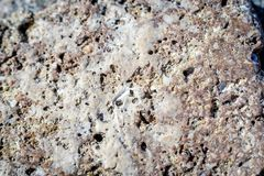Texture of the surface of the old shell stock images