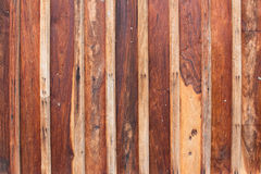 Texture surface wood Stock Image