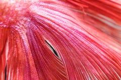 Texture of tail fish Stock Photos