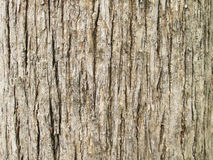 Texture of teak tree bark background Stock Photos