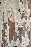 Vertical Texture Termites Stock Images