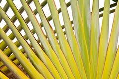 Texture of thai banana stem Stock Photos