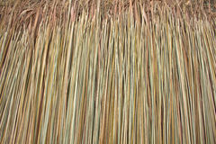 Texture of thatch Stock Photos