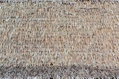 Texture of thatch roof Stock Photography