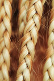 Texture of thin brown pigtails Stock Image
