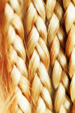 Texture of thin brown pigtails Royalty Free Stock Photo
