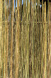 Texture of thin wooden wall Stock Photo