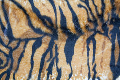 Texture tiger Stock Photo