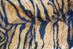 Texture tiger Stock Photo