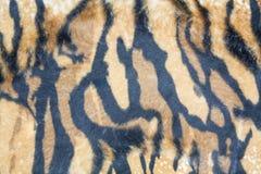 Texture tiger Royalty Free Stock Photos