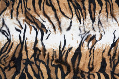 Texture tiger Stock Image