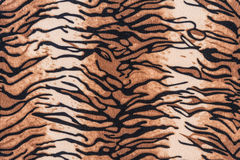Texture of tiger pelt and fur stock photography
