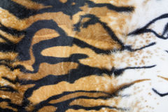 Texture of tiger skin. Background stock photos