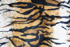 Texture of tiger skin. Background stock image