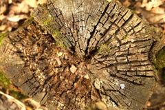 Texture timber tree stump Stock Photos