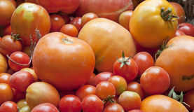 Texture with tomatoes Stock Image