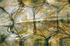 Texture of Tortoise Shell Royalty Free Stock Images