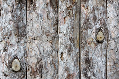 texture trä arkivbild