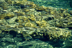 Texture transparent clear waters of the sea lake Stock Images