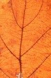 Texture transparente de lame Photos stock