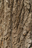 Texture of tree. The beautiful patterns of trees bark Royalty Free Stock Photos