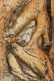 Texture of tree. The beautiful patterns of trees bark Stock Image