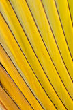 Texture of tree. A beautiful pattern of yellow trees Stock Image