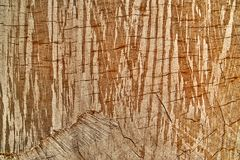 Texture tree background Royalty Free Stock Image