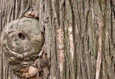 Texture of tree bark Stock Image
