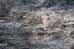 Bark texture. Texture of tree bark Royalty Free Stock Image