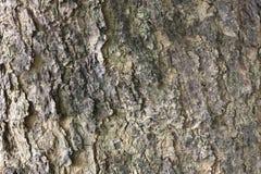 Texture of tree bark. Royalty Free Stock Photos