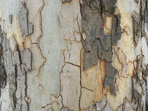 Bark texture Stock Photo