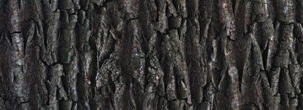 Texture of the tree bark, closeup, horizontal Royalty Free Stock Photography