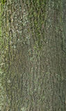 Texture of tree bark covered with green moss Royalty Free Stock Photos