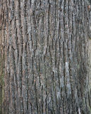 Texture of tree bark covered with green moss Royalty Free Stock Photography