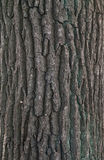 Texture of tree bark covered with green moss Stock Photo