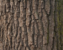 Texture of  tree bark covered with green moss Stock Image