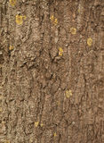 Texture of tree bark covered with green moss Royalty Free Stock Images