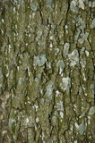 Texture of tree bark Royalty Free Stock Images