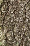 Texture of a tree bark royalty free stock photos