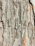 Texture of tree bark Stock Image