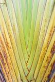 Texture of tree bark. Stock Image