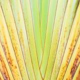Texture of tree bark. Royalty Free Stock Image