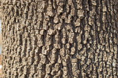 Texture of an tree bark on a sunny day. Tree bark on a sunny day. Texture of shadow and light rough surface. Amazing nature pattern royalty free stock photo